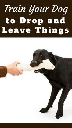 Useful Dog Obedience Training Tips – Dog Training Positive Dog Training, Training Your Puppy, Dog Training Tips, Training Exercises, Potty Training, Training Videos, Training Online, Training Schedule, Training Classes