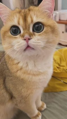 Follow us for more fun and cute videos of cats and dogs,as well as high quality products for dogs and cats. #cats #funnycats #catlovers #petlovers #cutecats #awwww #awwwwcute #catmemes #dogproducts #petproducts #dogitems #dogaccessories #dogsupplies Funny Cute Cats, Funny Cats And Dogs, Cute Cat Gif, Cute Funny Animals, Cute Little Kittens, Cute Baby Cats, Baby Animal Videos, Funny Animal Videos, Pretty Cats