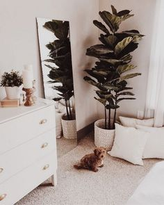bedroom corner with dresser and mirror ft. bedroom corner with dresser and mirror ft. puppy bedroom corner with dresser and mirror ft. Bedroom Plants Decor, Decor Room, Plant Decor, Home Decor Bedroom, Diy Bedroom, White Room Decor, Simple Bedroom Decor, Wall Decor, Room Interior
