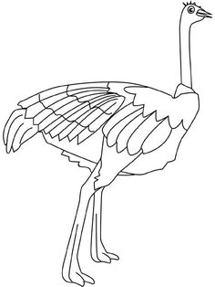 This Section Includes Enjoyable Colouring Free Printable Homework Ostrich Coloring Pages And Worksheets For Every Age These Are Suitable Preschool
