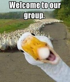 "Funny ""Welcome to the group""""images - Google Search Welcome To The Group, Pets, Funny, Dave Grohl, Image, David, Google Search, Animales, Frases"