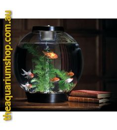 Information about Exotic Goldfish Home Aquarium, Aquarium Design, Aquarium Fish Tank, Aquarium Ideas, Tanked Aquariums, Fish Aquariums, Fish Tank Design, Cool Fish Tanks, Biorb