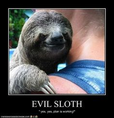 additional sos sloth pictures with captions