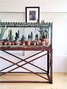 An old fish tank has been given a new (very cool) life. AMAZING IDEA. I CAN DO THE CACTUS COLLECTION★♥