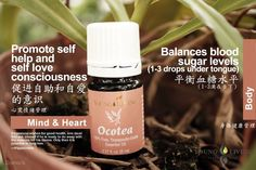Young Living Ocotea 奥寇梯木 https://www.youngliving.com/signup/?isoCountryCode=US&sponsorid=1704613&enrollerid=1704613