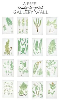 Free Ready-to-Print Gallery Wall: Fern Botanicals