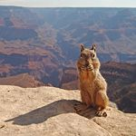 Squirrels are so friendly at the Grand Canyon! Next time I go I'm going to leave a trail of granola to my car so one comes home with me. Judge me if you want, they're adorable!
