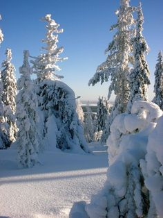 Crown snow-loaded forest in Pello in Lapland - Travel Pello - Lapland, Finland Helsinki, Snowy Pictures, Snow Forest, Forest Mountain, Winter Wonder, Landscape Pictures, Winter Activities, Winter Scenes, Winter Snow