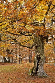 Bárbol, de El Señor de los Anillos al bosque de Vegabaño