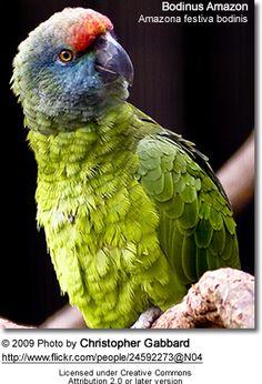 Tulsa Zoo and Living Museum Tropical American Rainforest exhibit. Tropical Birds, Colorful Birds, Ecuador, Tulsa Zoo, Animals And Pets, Cute Animals, Budgies, Parrots, Amazon Parrot