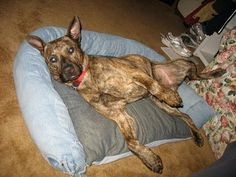 Dog jean bed!
