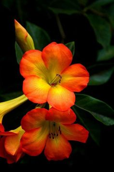 Best 25+ Types Of Exotic Tropical Flowers For Your Home And Garden