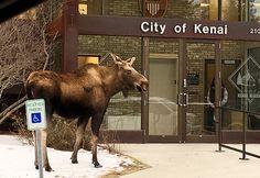 Town mascot Photo by: Martha Lucia Morgan