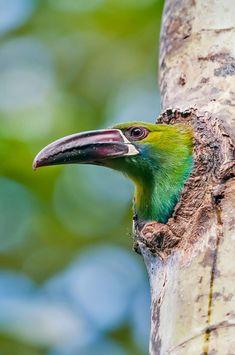 Beautiful Birds, Animals Beautiful, Wild Birds, Bird Art, Bird Feathers, Under The Sea, Background Images, Amazing Photography, Bing Images