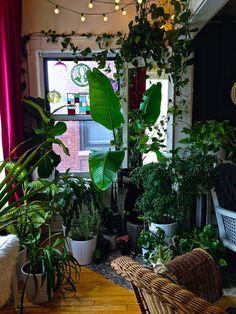 Katie's plant life is gorgeous! Ms. Tungsten | http://mstungsten.blogspot.com