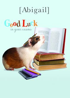 Personalised Good Luck hamster card - Get all your personalised cards and gifts from HelloTurtle
