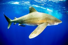 Sharks, Gallery, Archive, Photography, Life, Animals, Tights, Photograph, Animales