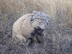 Homem fica surpreso ao descobrir que os gatinhos que encontrou não eram gatos
