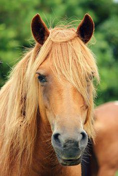 Beautiful redhead from Assateague Island National Seashore, Maryland by Jennifer MacNeill