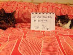 """We hog the bed at bedtime"""