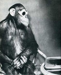 pimp'n chimp