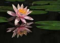 Perfect reflection! Reflection