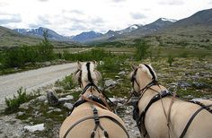 Kvebergsøya Overnatting Folldal Rondane Nasjonalpark Historisk Gård Horses, Animals, Nature, Viajes, Animales, Animaux, Animal, Animais, Horse