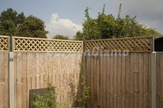 ways to extend height on a privacy fence - Modern Privacy Trellis, Wood Privacy Fence, Trellis Fence, Privacy Landscaping, Concrete Fence, Backyard Privacy, Backyard Fences, Privacy Screens, Fence Slats
