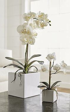 Our potted faux orchid plants grace a bathroom counter, bookshelf or coffee table with the plant's signature delicate blossoms and glossy green leaves. Potted in attractive white square planters, the orchids look as natural as the real thing.