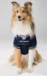 449809e79 HOT ITEM  New England Patriots Dog Jersey http   www.fansedge.