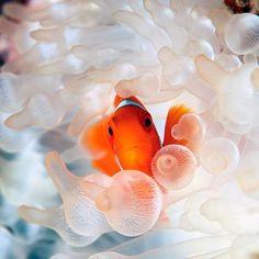 Marine Biology worksheets