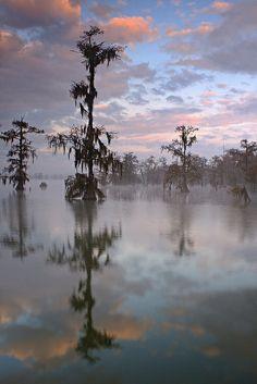 Lake Martin Cypress Trees Rising Out of the Fog - Breaux Bridge, LA by Ben Pierce