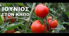 Η ευχαρίστηση έρχεται με τα απλά πράγματα. Ο Ιούνιος θα σας βρίσκει κάθε μέρα στο πάγκο του κήπου σας να κόβετε μια σαλάτα με ντομάτες και πιπεριές, που μόλις μαζέψατε και να την απολαμβάνετε με μια φέτα ψωμί βουτηγμένη στο λάδι. Τα φυτά σας αυτό το μήνα θα αναπτυχθούν πλήρως και θα απολαύσετε τους καρπούς …