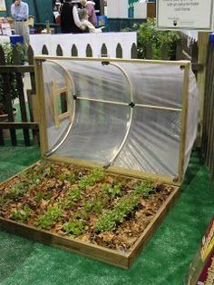 MIni Greenhouse with easy open roof - Itsy Bitsy Spiders: click on home then garden #roofgardens #greenhousegardening