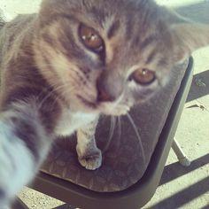 【悶絶級】ネコ「自分撮り」の可愛さは異常。21選 + 5選