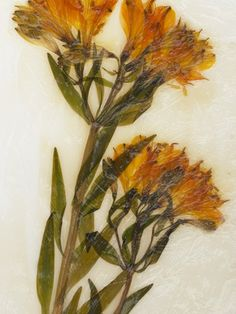 Pressed flower , Wall Art and Home Décor at Art.com