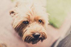 Tratamiento de los parásitos internos en perros