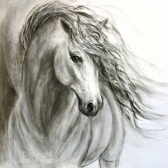 Charcoal Drawing Tips Charcoal horse drawing of 'Equine Sublime' giclee print on canvas or paper - Horse Head Drawing, Horse Drawings, Animal Drawings, Pencil Drawings, Sketches Of Horses, Horse Pencil Drawing, Charcoal Drawings, Horse Artwork, Pencil Drawing Tutorials