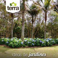 Una idea para un jardín con mucho estilo es combinar palmeras o árboles de tallo alto con unas tupidas y bien tenidas #hortensias ¡siempre hacen ver todo naturalmente hermoso!