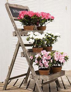 Decorar con azaleas y plantas florales