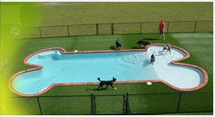 Great place to board your pet or even give them a day of play.