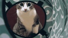 10 Things Cats Do Without Realizing They're Being Adorable - Page 2 of 2