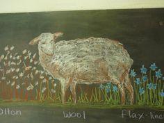 Waldorf ~ 3rd grade ~ Fibers & Clothing ~ Wool ~ chalkboard drawing