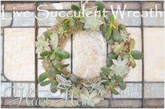 live succulent wreath