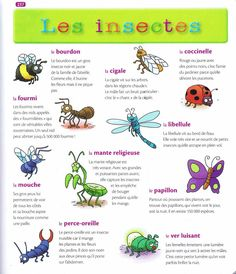 Source: Mon premier dictionnaire de Français Larousse French Language Lessons, French Language Learning, French Lessons, Teaching Spanish, Teaching Kids, Spring Activities, Kindergarten Activities, Book Activities, French Practice
