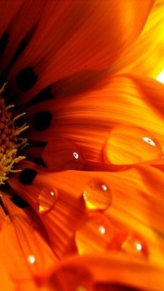 Orange flower and drop