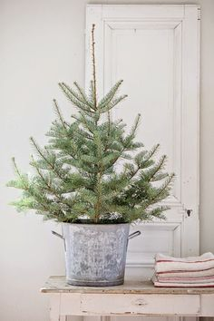 Tree in zinc bucket