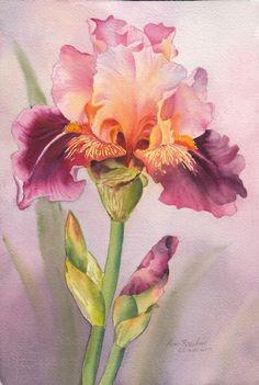 Watercolor Flowers, Watercolor Paintings, Original Paintings, Iris Painting, Iris Flowers, Thing 1, Illustrations, Flower Art, Framed Art
