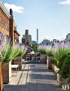 An airy New York terrace featuring an abundance of Russian sage in ipe-wood boxes | archdigest.com