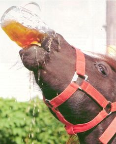 Horsing Around Drink like a man